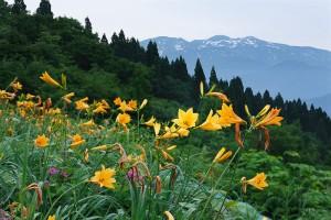 西山高山植物園から白山