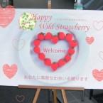happywildstraberry